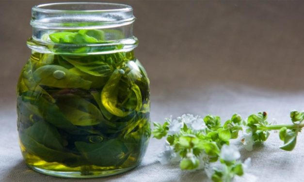 Olio al basilico – Basilicumolie