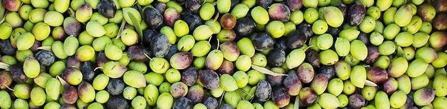 conservazione-delle-olive-verdi