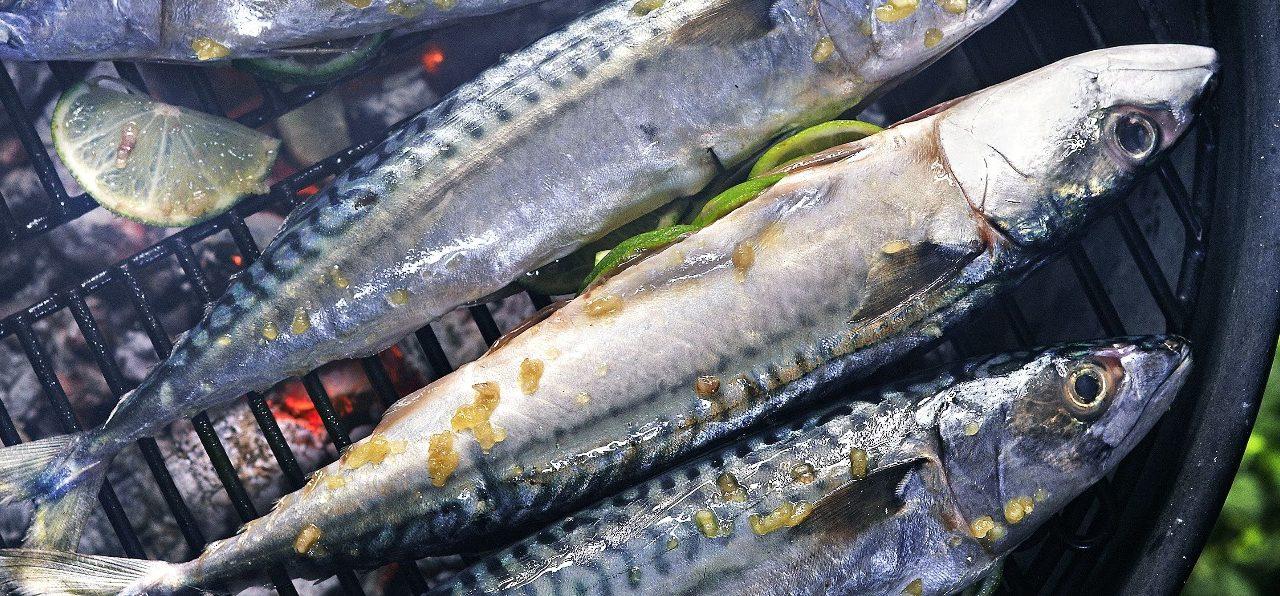 Sgombro dalla griglia – Gegrilde makreel